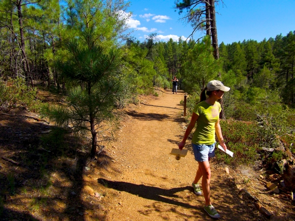 Free Naturalists Field Walks
